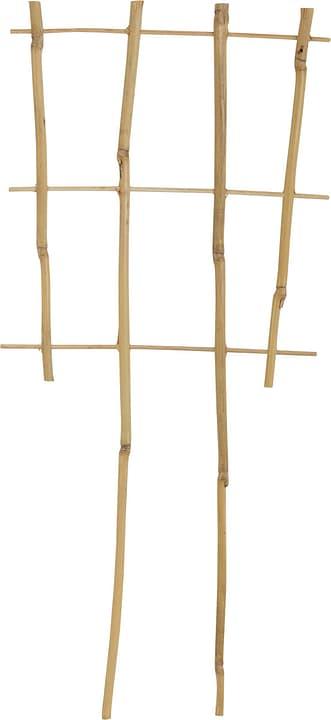 Puntelli per pianti di bambù Griglia di appoggio Windhager 631238100000 N. figura 1