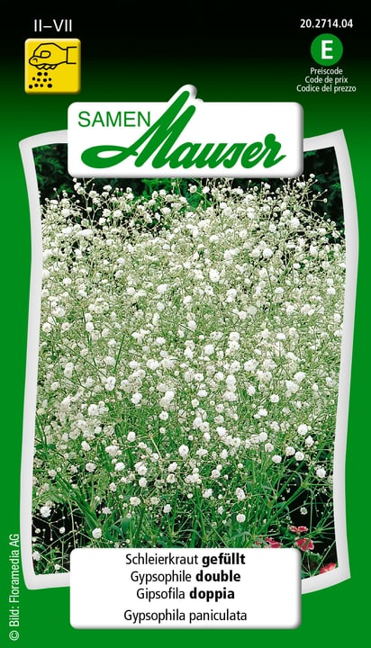 Gipsofila doppia Sementi di fiori Samen Mauser 650118211000 Contenuto 1 g (env. 80 plantes ou 7 m N. figura 1