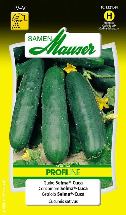 Cetriolo Selma®-Cuca Semente Samen Mauser 650110604000 Contenuto 20 semi (ca. 10 - 15 piante o 3 - 4 m²) N. figura 1