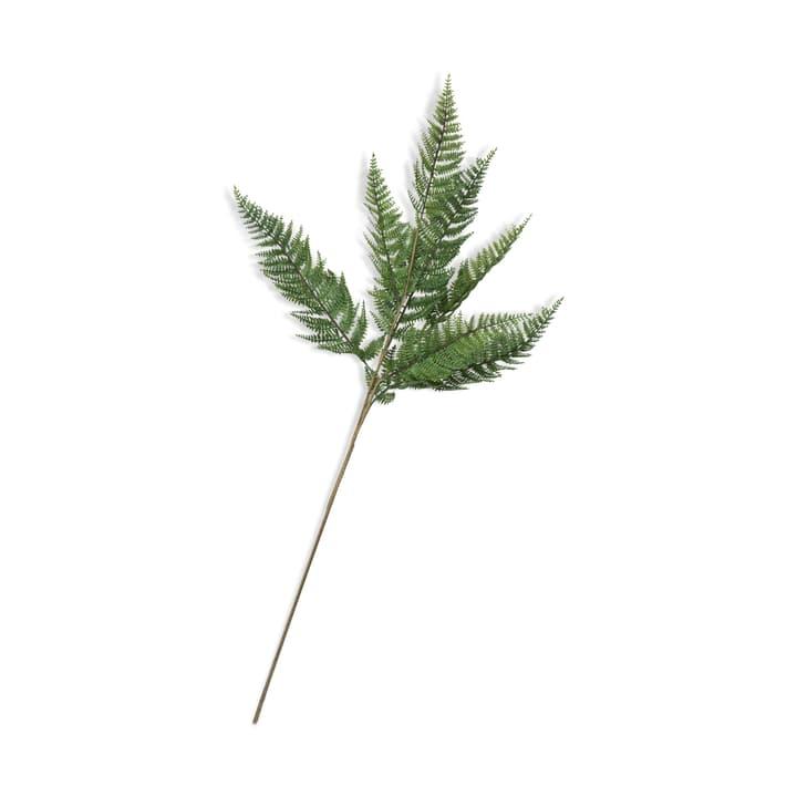 ALE Branche plante de fougère 390257300000 Photo no. 1