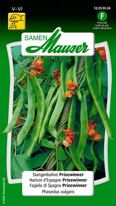 Fagiolino di Spagna Prizewinner a fiori rossi Semente Samen Mauser 650115502000 Contenuto 80 g (ca. 20 pertiche o 8 m²) N. figura 1