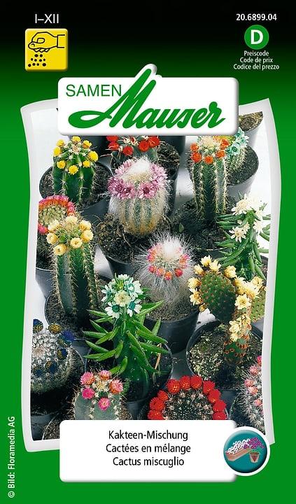 Cactus miscuglio Semente Samen Mauser 650104401000 Contenuto 0.25 g (ca. 40 piante) N. figura 1
