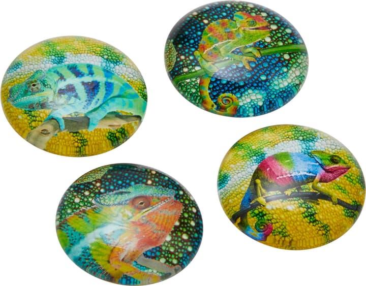CHAMELEON Magnete 432020100000 Bild Nr. 1