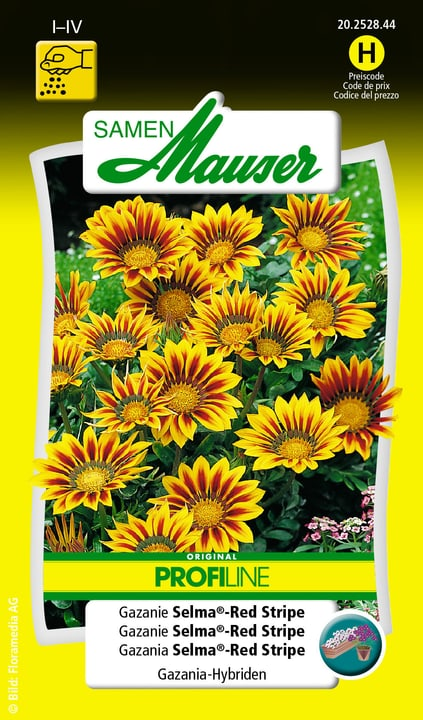 Gazanie Selma®-Red Stripe Samen Mauser 650103801000 Contenu 40 graines (ens. 20 plantes ou 2 - 2.5 m²) Photo no. 1