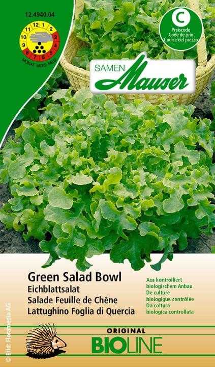 Salade Feuille de Chéne Green Salad Bowl bio Semence Samen Mauser 650109801000 Contenu 2.5 g (4 - 5 m²) Photo no. 1