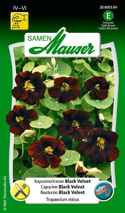 Cappuccino Black Velvet Semente Samen Mauser 650107802000 Contenuto 3 g (ca. 25 piante o 3 m²) N. figura 1