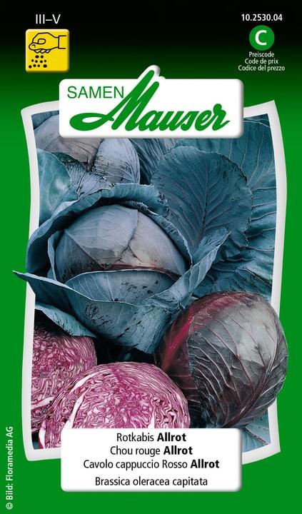 Rotkabis Allrot Samen Mauser 650114301000 Inhalt 1 g (ca. 80 - 100 Pflanzen oder 15 m² ) Bild Nr. 1