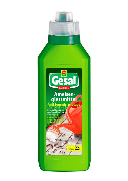 Ameisengiessmittel, 450 g Compo 658509500000 Bild Nr. 1