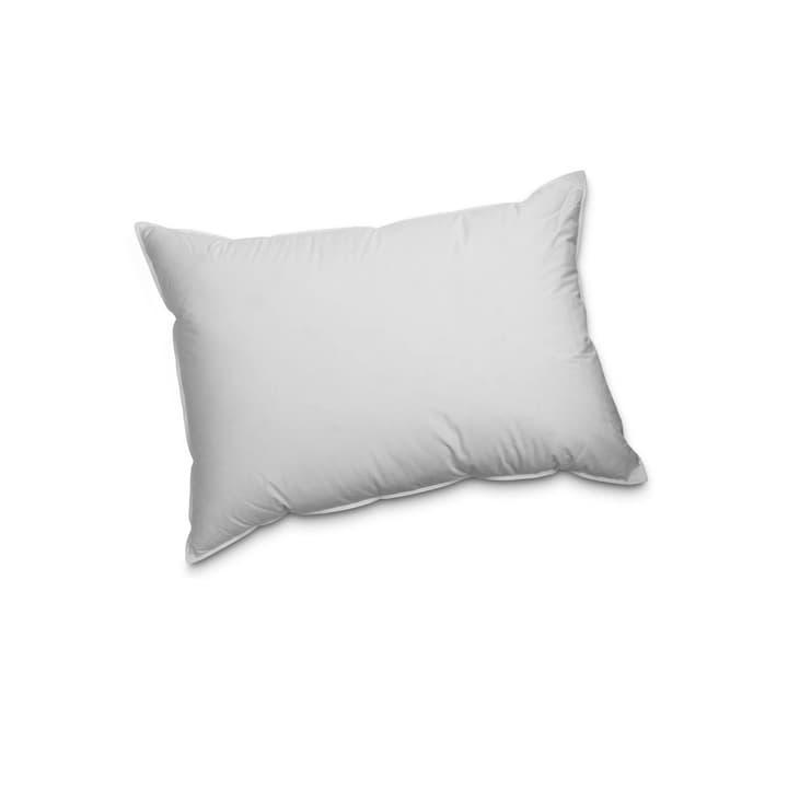 PREMIUM REGULAR Exklusives Federnkissen für höchsten Schlafkomfort 376051100000 Farbe Weiss Grösse L: 50.0 cm x B: 70.0 cm Bild Nr. 1