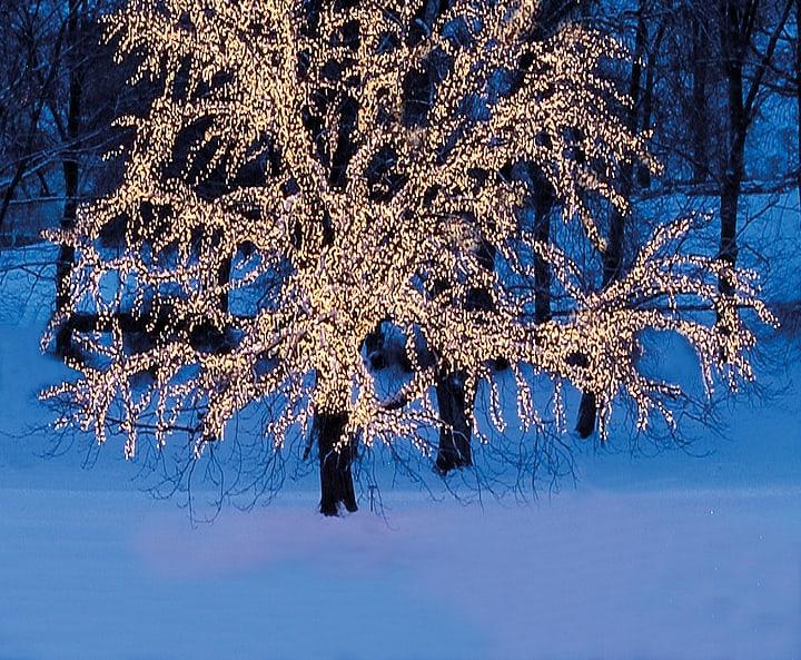 LED Lichtnetz, 3x3 m Star Trading 613145800000 Bild Nr. 1