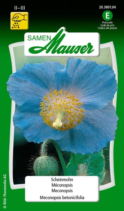 Méconopsis, bleu ciel / Meconopsis betonicifolia Semence Samen Mauser 650105401000 Contenu 0.03 g (env. 15 plantes ou 1 m²) Photo no. 1
