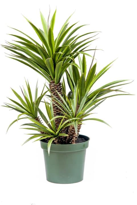 Plante grasse artificielle Star/Aloe Ferox Do it + Garden 658959100000 N. figura 1