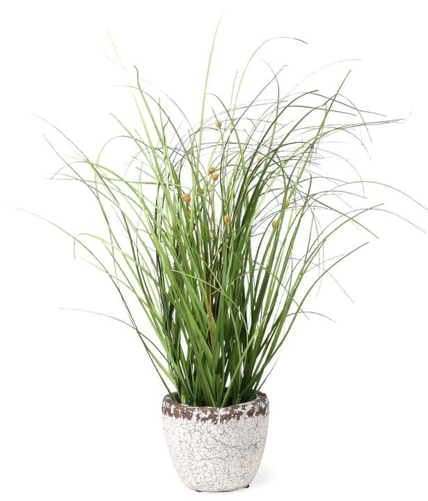 HERBE Plante artificielle 440677200000 Photo no. 1