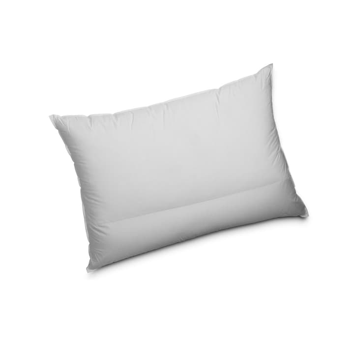 COMFORT NATURA Coussin de nuque 376040400000 Photo no. 1