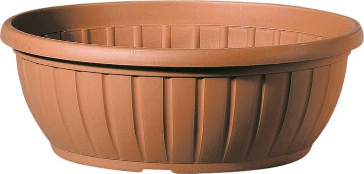 Ciotola per piante Naxos Deroma 659535700000 Taglio ø: 40.0 cm x A: 4.8 cm Colore Marrone N. figura 1