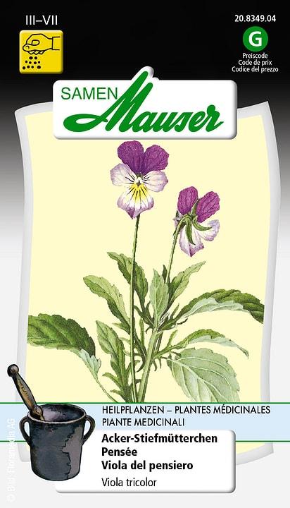 Pensée Semence Samen Mauser 650118705000 Contenu 0.1 g (env. 50 plantes ou 1 m Photo no. 1