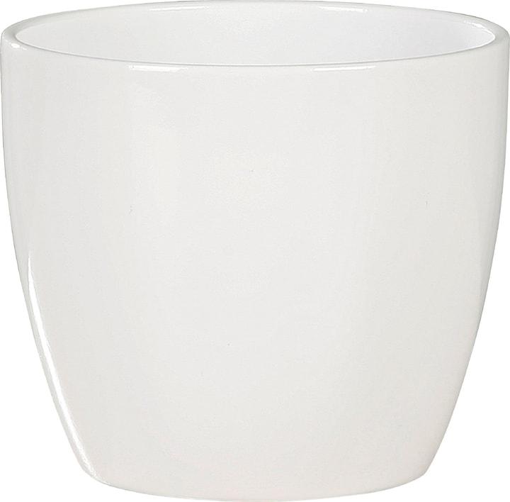 Cache-pot pour cactus blanc Scheurich 657482100000 Taille ø: 7.0 cm x L:  x L:  x P:  x H:  Photo no. 1