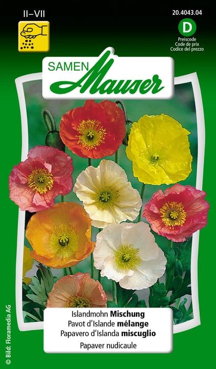 Pavero d'Islanda miscuglio Semente Samen Mauser 650105901000 Contenuto 0.1 g (ca. 100 piante o 3 - 4 m²) N. figura 1