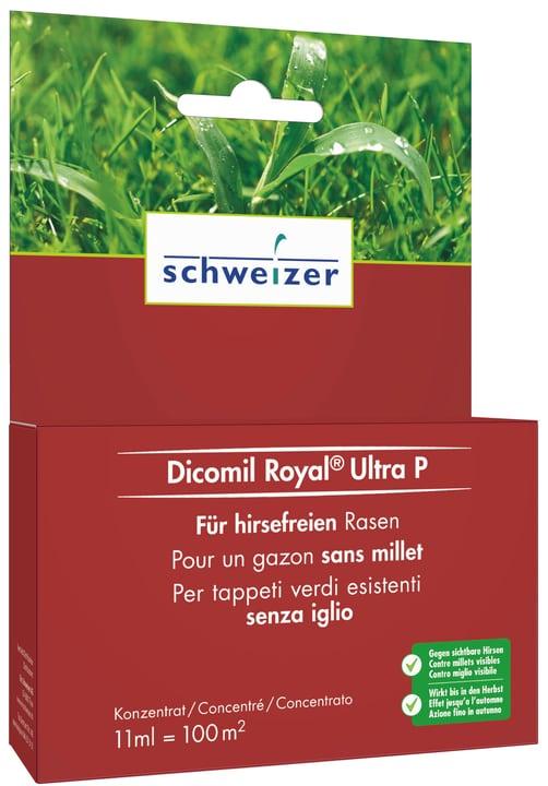 Dicomil Royal Ultra P, 11 ml Eric Schweizer 658014600000 Bild Nr. 1