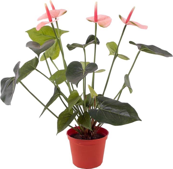 Anthurium artificiel Do it + Garden 656104700000 N. figura 1