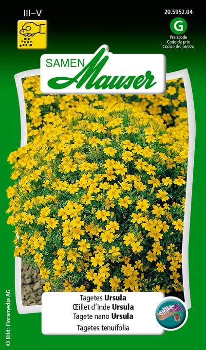 OEillet d'Inde Ursula Samen Mauser 650107511000 Contenu 1 g (env. 80 plantes ou 5 - 6 m²) Photo no. 1