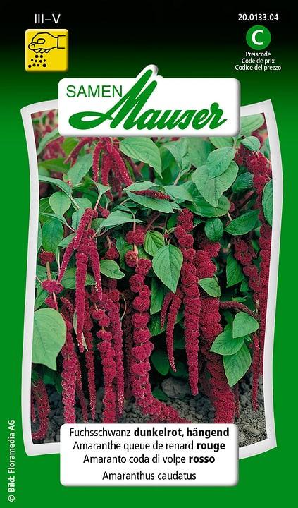 Amaranto coda di volpe rosso Samen Mauser 650100801000 Contenuto 1 g (ca. 400 piante o 20 m² ) N. figura 1
