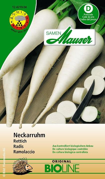 Radis Neckarruhm Samen Mauser 650113904000 Contenu 5 g (env. 250 plantes ou 5 m²) Photo no. 1