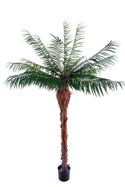 Plante artificielle palmier phoenix Do it + Garden 659326180073 Colore Verde Taglio L: 160.0 cm x L: 160.0 cm x A: 180.0 cm N. figura 1