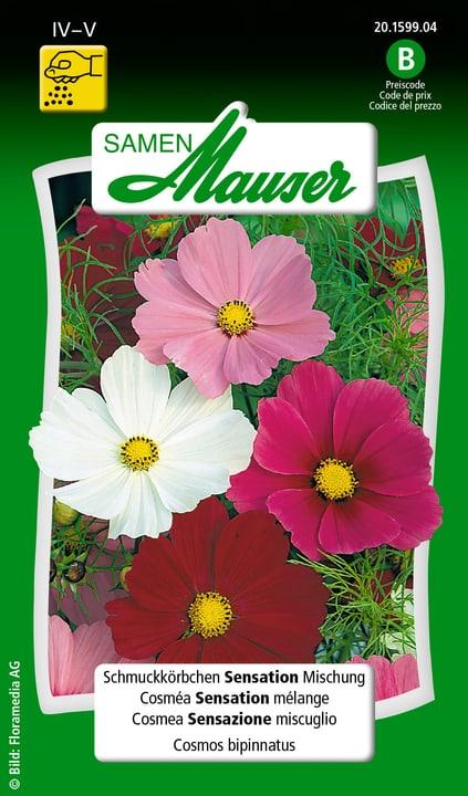 Schmuckkörbchen Sensation Mischung Saat Samen Mauser 650102801000 Inhalt 1 g (ca. 50 Pflanzen oder 5 m² ) Bild Nr. 1