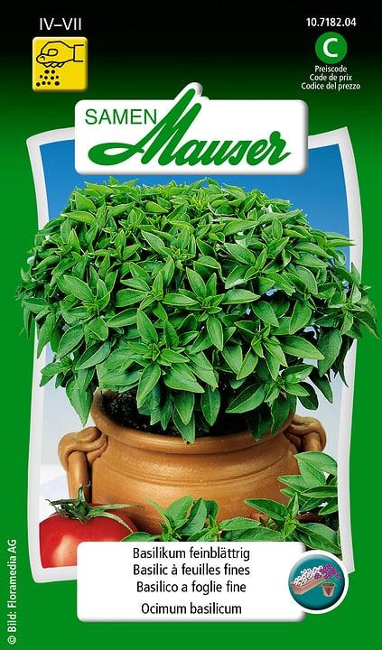 Basilic à feuilles fines Semence Samen Mauser 650108701000 Contenu 2.5 g (env. 5 m²) Photo no. 1