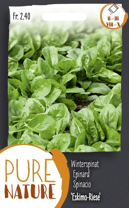 Winterspinat 'Eskimo-Riese' 20g Gemüsesamen Do it + Garden 287113100000 Bild Nr. 1