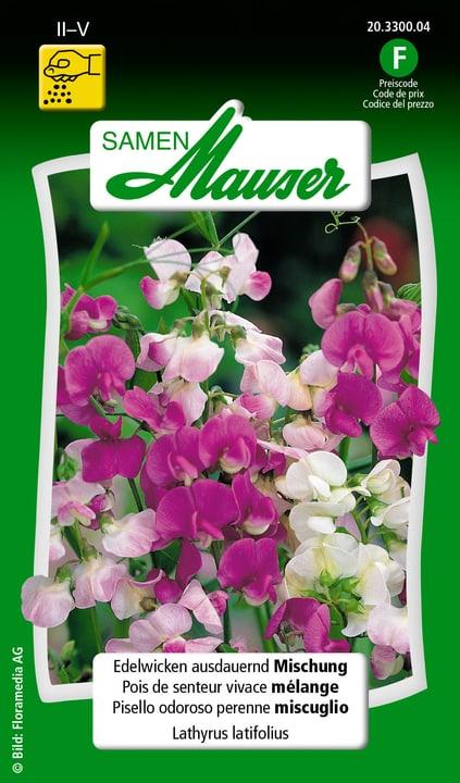 Pisello odoroso perenne miscuglio Semente Samen Mauser 650107301000 Contenuto 2.5 g (ca. 20 piante o 1 m²) N. figura 1
