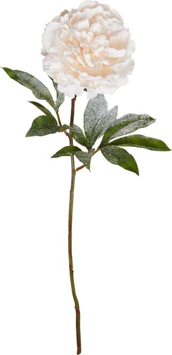 XMAS Kunstpflanze 444894400000 Bild Nr. 1
