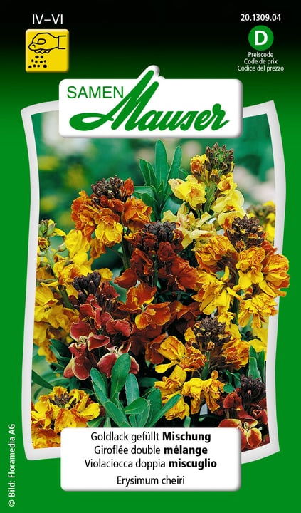Goldlack gefüllte Mischung Samen Mauser 650102201000 Inhalt 0.5 g ( ca. 50 Pflanzen oder 4 m² )  Bild Nr. 1