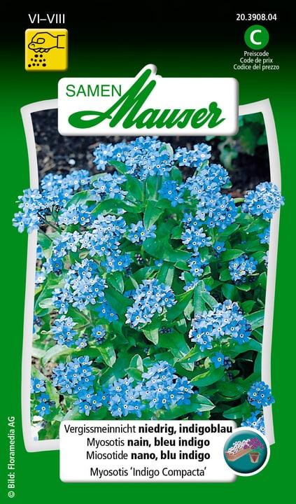 Myosotis nain, bleu indigo Samen Mauser 650105502000 Contenu 0.75 g (env. 100 plantes ou 5 m²) Photo no. 1