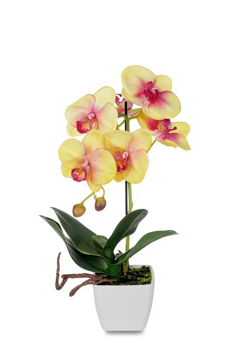 Pianta artificiale, Phalaenopsis, gialla Do it + Garden 658955800000 Photo no. 1