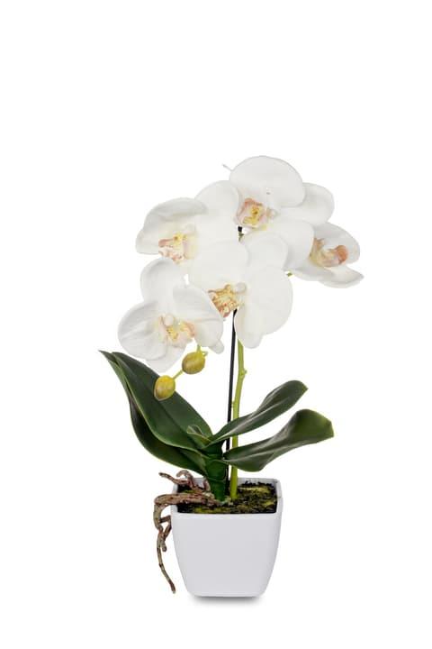 Plante artificielle phalaenopsis crème Do it + Garden 658955700000 N. figura 1
