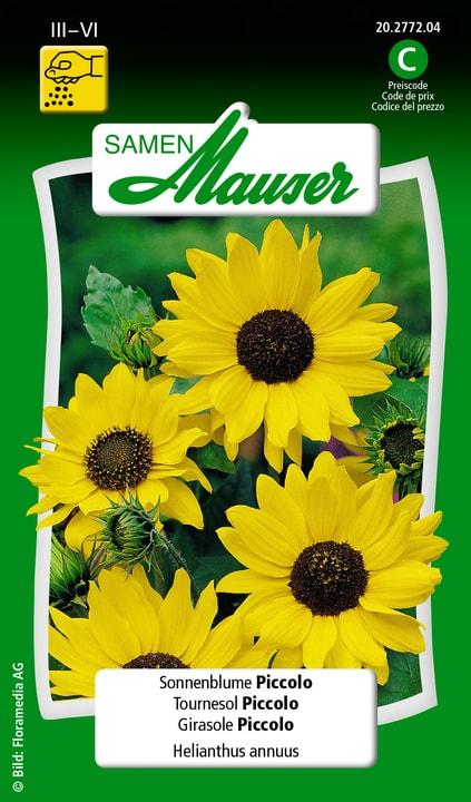 Girasole Piccolo Semente Samen Mauser 650104105000 Contenuto 1 g (ca. 50 piante o 5 m²) N. figura 1