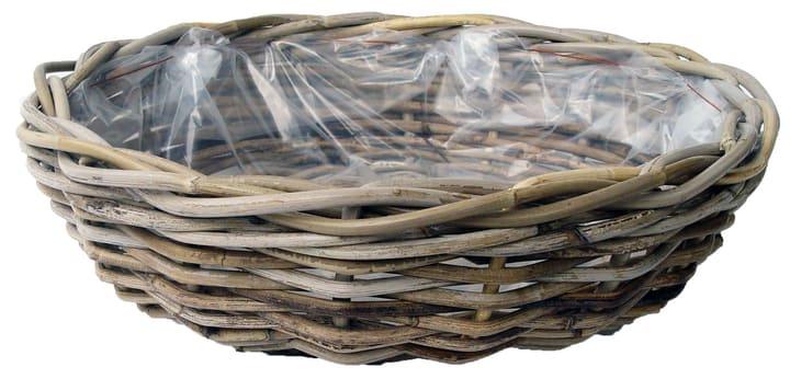 Terrine pour plante Do it + Garden 656106300000 Taille ø: 41.0 cm x H: 12.0 cm Couleur Gris Photo no. 1