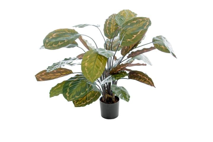 Kunstpflanze Calathea Do it + Garden 658957000000 Bild Nr. 1