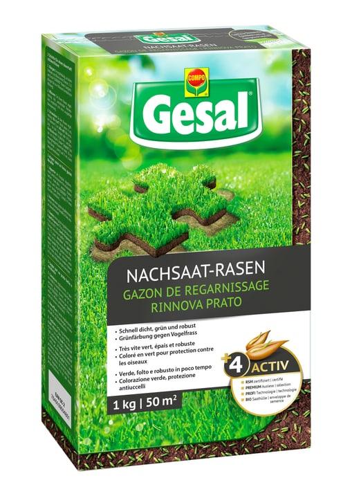 Nachsaat-Rasen, 1 kg Compo Gesal 659211700000 Bild Nr. 1