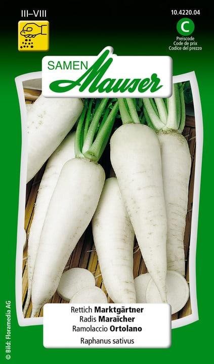 Radis Maraicher Samen Mauser 650113903000 Contenu 5 g (env. 200 plantes ou 4 m²) Photo no. 1