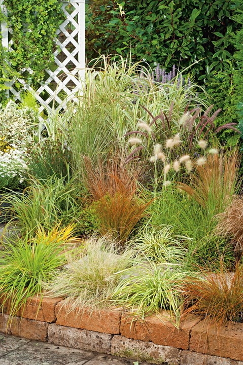 Carex Mix 12cm 308215300000 Bild Nr. 1