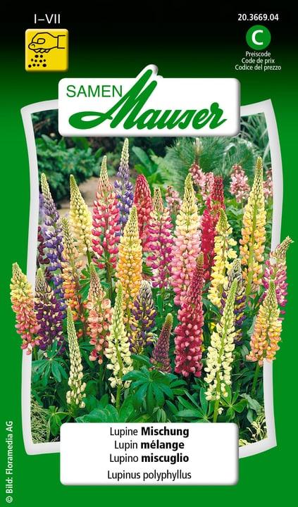 Lupino miscuglio Samen Mauser 650105201000 Contenuto 2 g (ca. 40 piante o 6 m²) N. figura 1