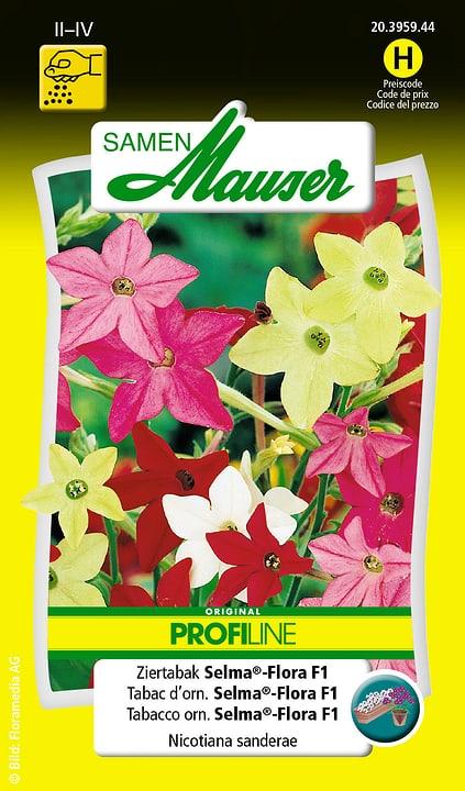 Tabacco orn. Selma®-Flora F1 Samen Mauser 650105701000 Contenuto 200 semi (ca. 100 piante o 4 m²) N. figura 1