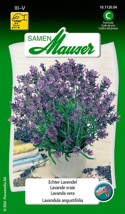 Echter Lavendel Saat Samen Mauser 650112101000 Inhalt 0.5 g (ca. 30 Pflanzen oder 3 - 5 m² ) Bild Nr. 1