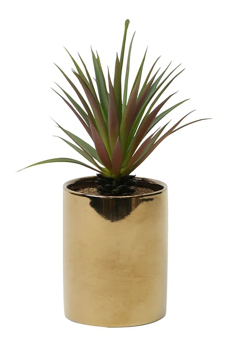 Succulentes en pot d'or, longue, 15x15x22cm Do it + Garden 656548500001 Couleur Or Taille L: 15.0 cm x P: 15.0 cm x H: 22.0 cm Photo no. 1