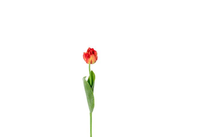 Fiore artificiale di tulipano Do it + Garden 657097600004 Couleur Rouge Taille L: 62.0 cm Photo no. 1