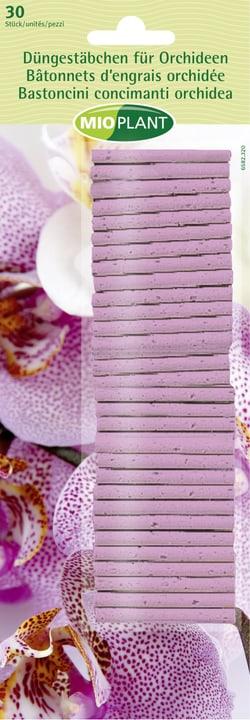 mioplant d ngest bchen f r orchideen 30 st ck kaufen bei do it garden. Black Bedroom Furniture Sets. Home Design Ideas