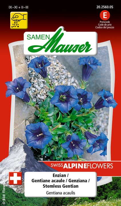 Gentiane acaule Semences de fleurs Samen Mauser 650103401000 Contenu 0.04 g Photo no. 1